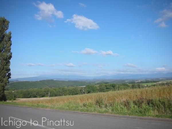 Hokkaido Ichigo to Pinattsu