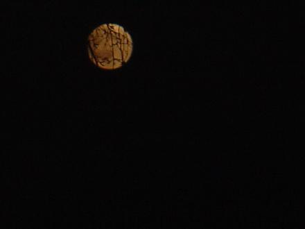 Lune orange dans Le jardin des souvenirs dsc00311