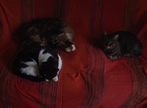 Chats d'hiver dans Le Miroir des Chats dsc00312