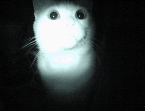 ... de Chats étranges... dans Le Miroir des Chats dsc09110