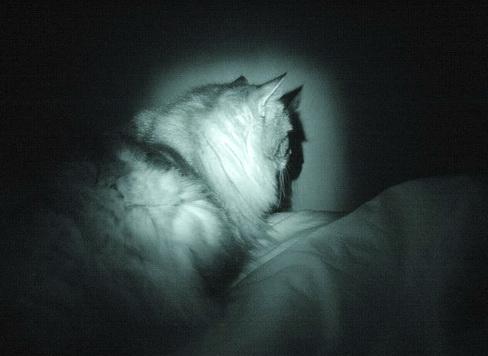 La nuit la Chambre est envahie...  dans Le Miroir des Chats dsc09210