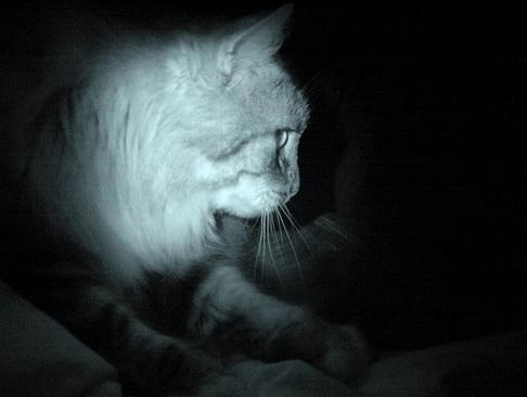 ... Qui peuplent le lit... dans Le Miroir des Chats dsc09211