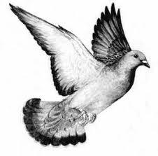 معلومات عامة عن طيور الحمام