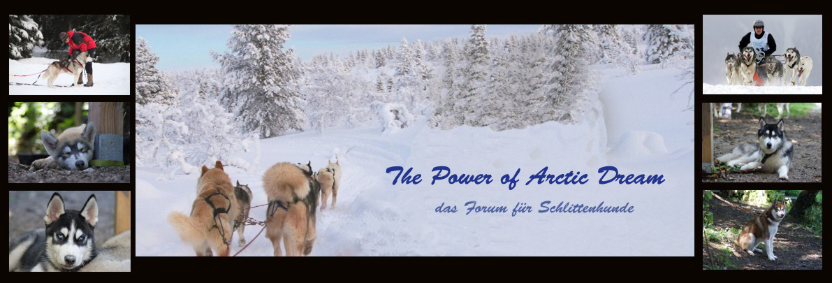 The Power of Arctic Dream das Forum für Schlittenhunde