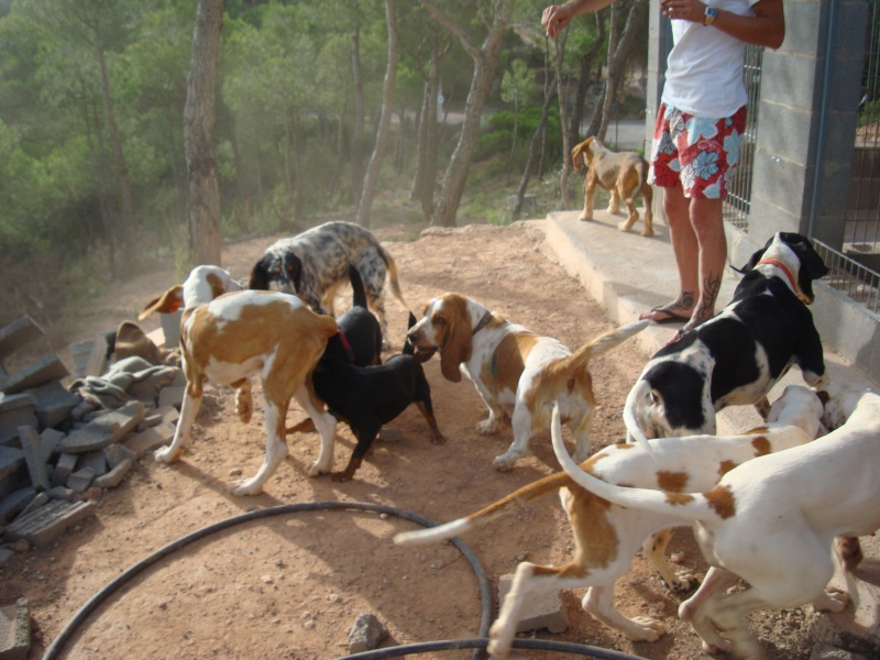 Nuestros perros de caza - Pienso para perros de caza ...