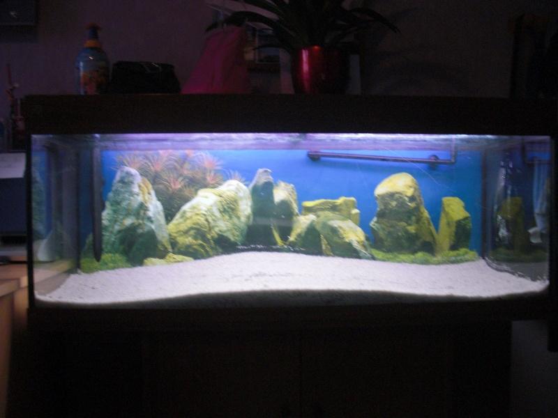 Lancement d 39 aquarium d 39 eau chaude page 5 for Aquarium eau chaude