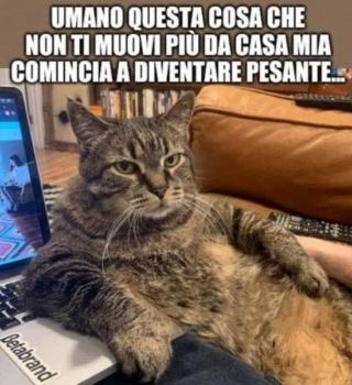 gatto-11.jpg
