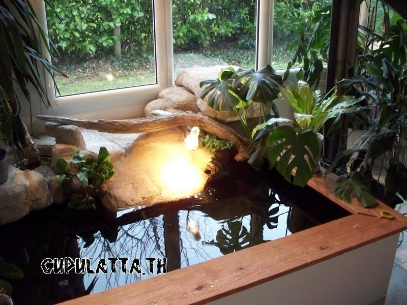 Exemples de bassins int rieurs pour aquatiques for Bassin exterieur pour tortue de floride