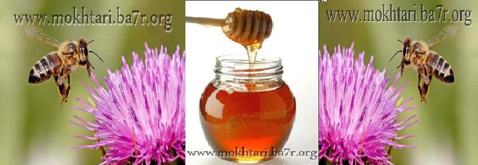 مؤسسة مختاري لتربية النحل