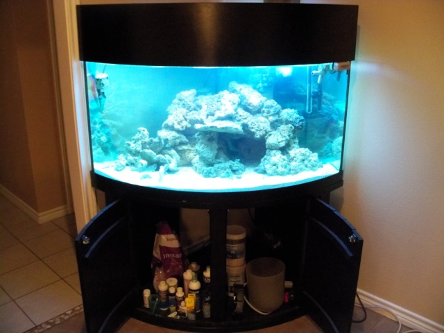 100 gallon fish tank dimensions in feet 2017 fish tank for 55 gallon corner fish tank