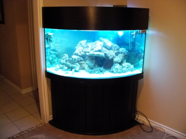 100 gallon fish tank bow front 100 gallon bow front for Corner fish tank for sale