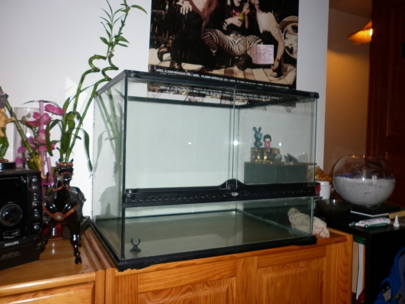 Quelle Colle Pour Decor Aquarium