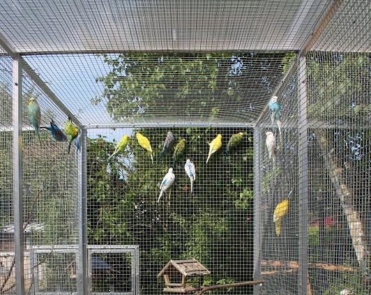 Oiseau voliere exterieur beautiful en priode hivernal les for Voliere oiseau exterieur