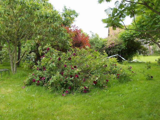 Le jardin des rosiers 86 page 2 for Jardin 86