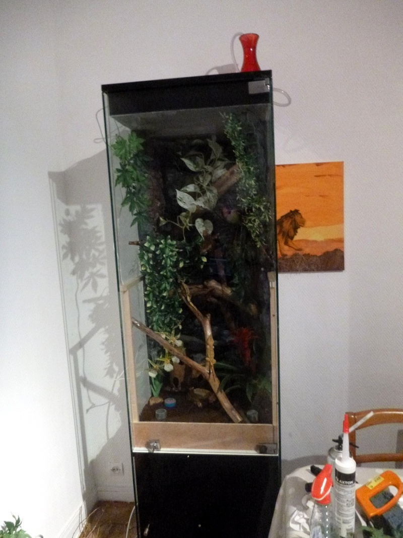 tuto transformer une vitrine en vivarium tropical