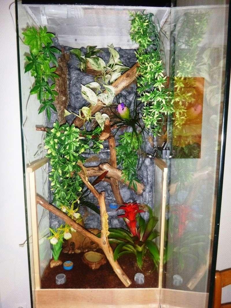 tuto transformer une vitrine en vivarium tropical. Black Bedroom Furniture Sets. Home Design Ideas
