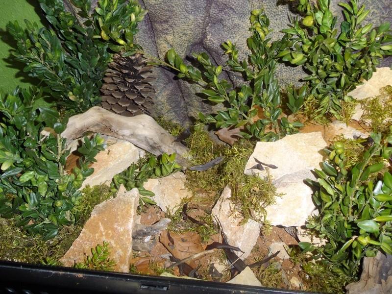 plante terrarium desertique