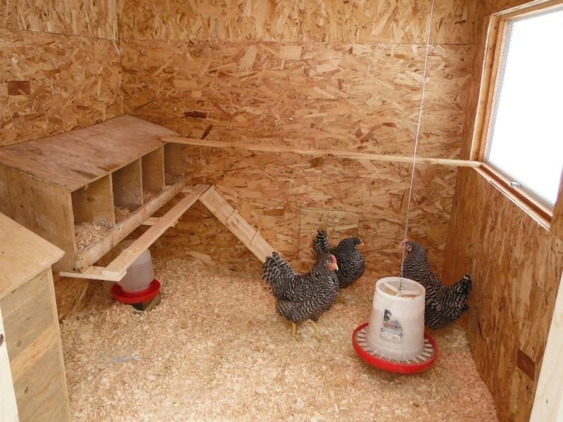 Photos de vos poulaillers page 8 - Maison pour les poules ...