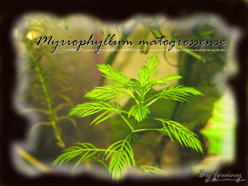 myriop10.jpg